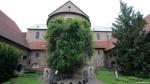 Rosier millénaire Hildesheim.jpg