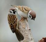 paris,oiseaux