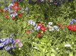 Arboretum_Vincennes_033Web.jpg
