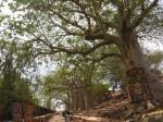 baobab_17.jpg